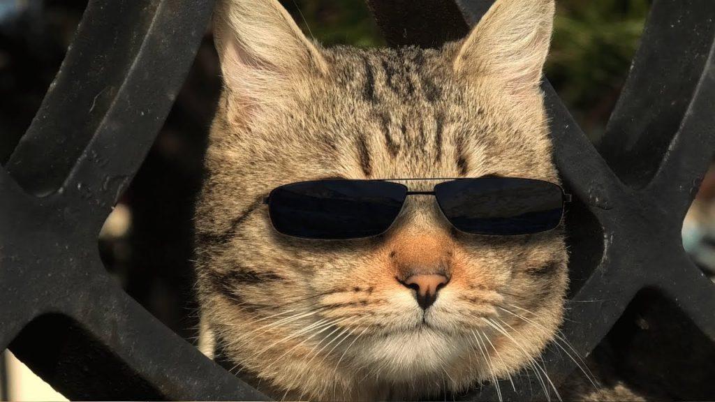 Кот в черных очках символизирует человека, который включил режим невидимки во ВКонтакте
