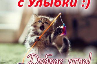 Картинка Доброе утро со смешным котиком