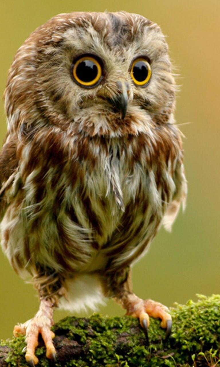 картинки классных птиц что