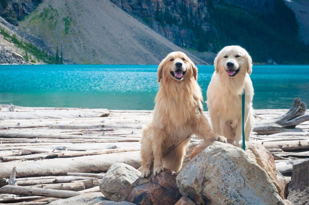 Фото собак: 100 лучших картинок на рабочий стол, заставку или для открытки